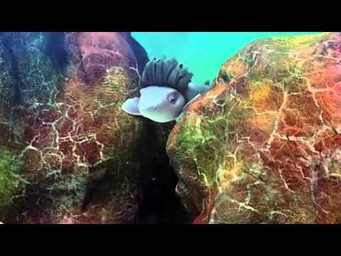 Trailer do filme O Peixe dos Desejos