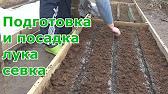 Голландия лук севок вулкан (1 кг)✓ купить в интернет магазине. Семена ✈ с доставкой по украине. ☎ заказы по телефону (050)786-69-17.
