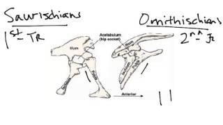 102 - M dinosaur types