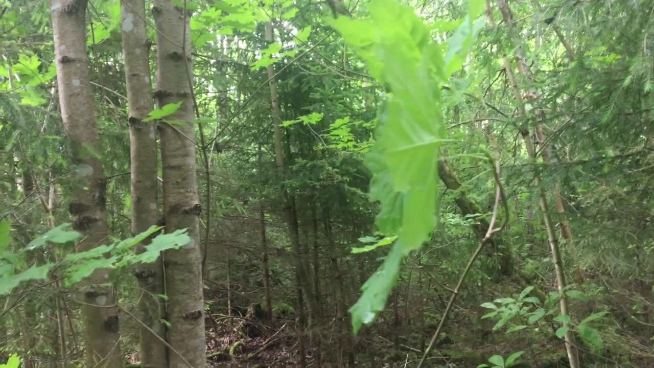 Filosofía en el bosque 18. Neuroartes y literatura. Parte 1.