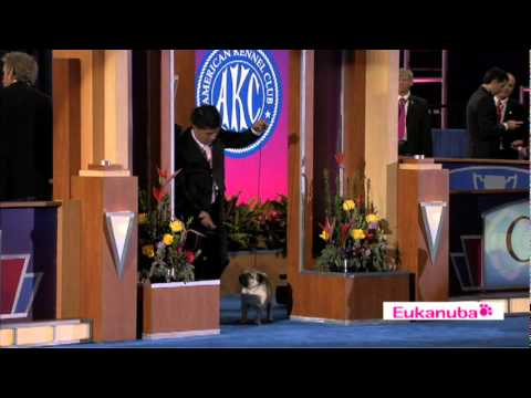 Eukanuba World Challenge Finals Part 1
