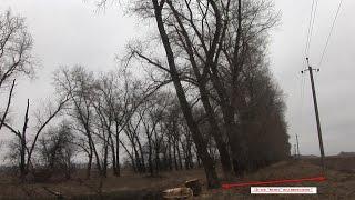 Требухів Вирубка дерев ч.2 12 березня 2015р.