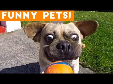 Funniest Pets & Animals of the Week Compilation June 2018 | Hilarious Try Not to Laugh Animals Fail