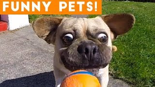 Funniest Pets & Animals of the Week Compilation June 2018 | Hilarious Try Not to Laugh Animals Fail thumbnail