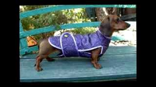 Cool Clothes For Everyday Wear For Dachshund Dogs