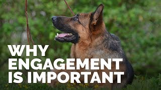 Why Engagement  Is Important In Dog Training