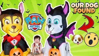 Surprise PAW PATROL Halloween Inflatables 2019 found by our DOG! Marshall & Chase Gemmy Airblown