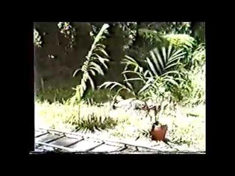 ROBOWAR - BEHIND THE SCENES, REB BROWN, CATHERINE HICKLAND, PHILIPPINES, Dir. Bruno Mattei