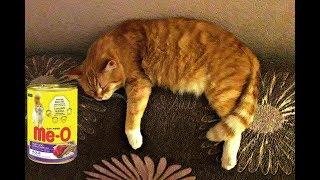 Ме О корм для кошек из Тайланда Как выглядит