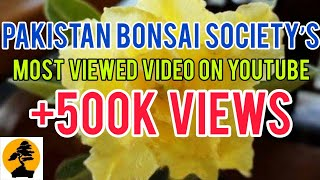 How to graft small piece of Adenium to get new color | Pakistan Bonsai Society