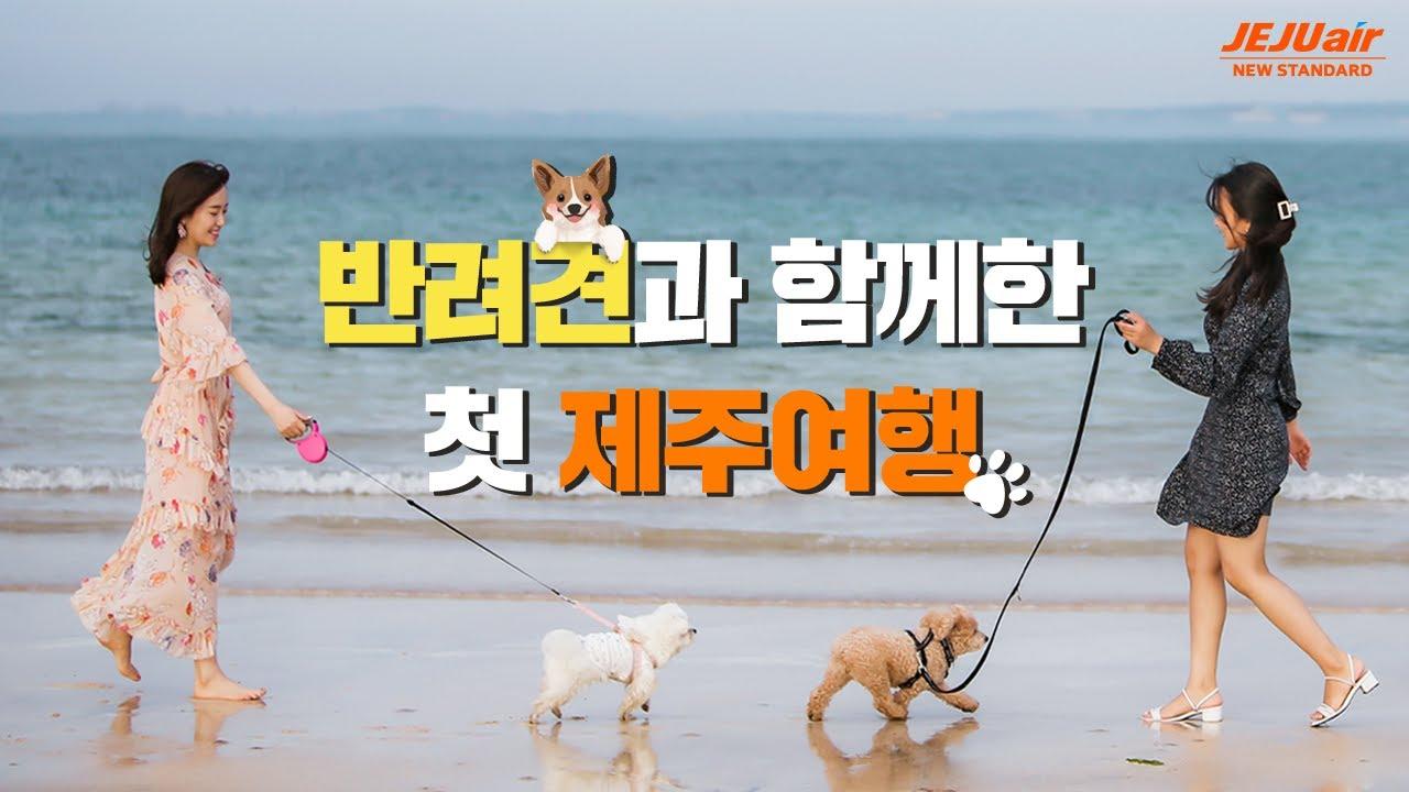 나의 반려견과🐶 함께한 첫 제주여행 이야기 │댕댕이랑 같이 GO │ 강아지와 제주항공 타고 여행 가요 ✈