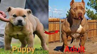 Dogs Grow Up - i'm a big kid now Baby to Adult Dogs #43