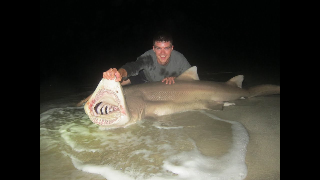 Shark fishing the beach new jersey brown sandtiger for Nj surf fishing reports