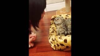 Кошка рычит как будто бы рысь
