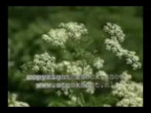 Megan Thee Stallion - Savage (Lyrics) from YouTube · Duration:  3 minutes 15 seconds