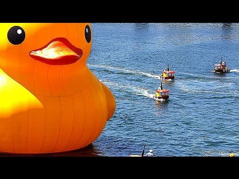 Giant rubber duck swims through Sydney Harbour