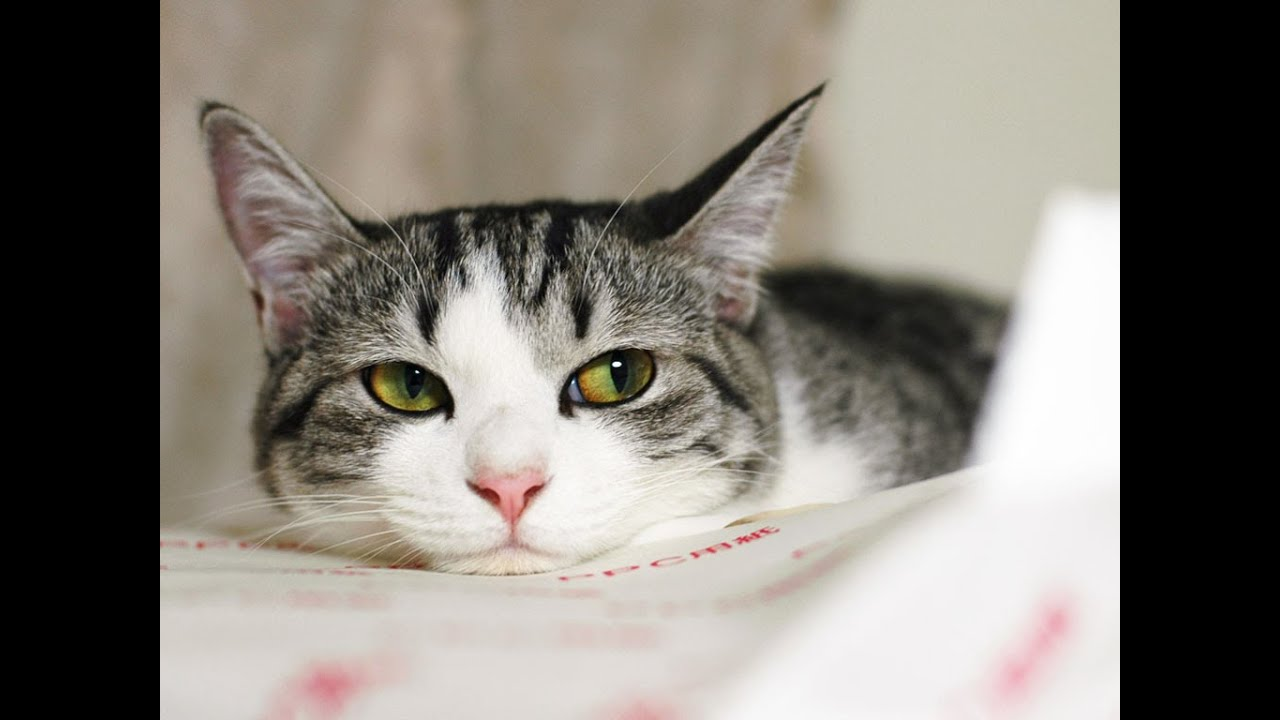 cute cat pictures hd wallpapers youtube
