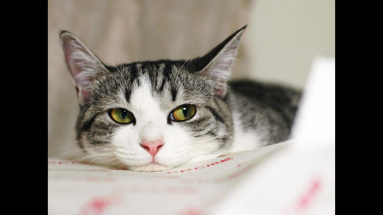 Kitty Cat Cat Food