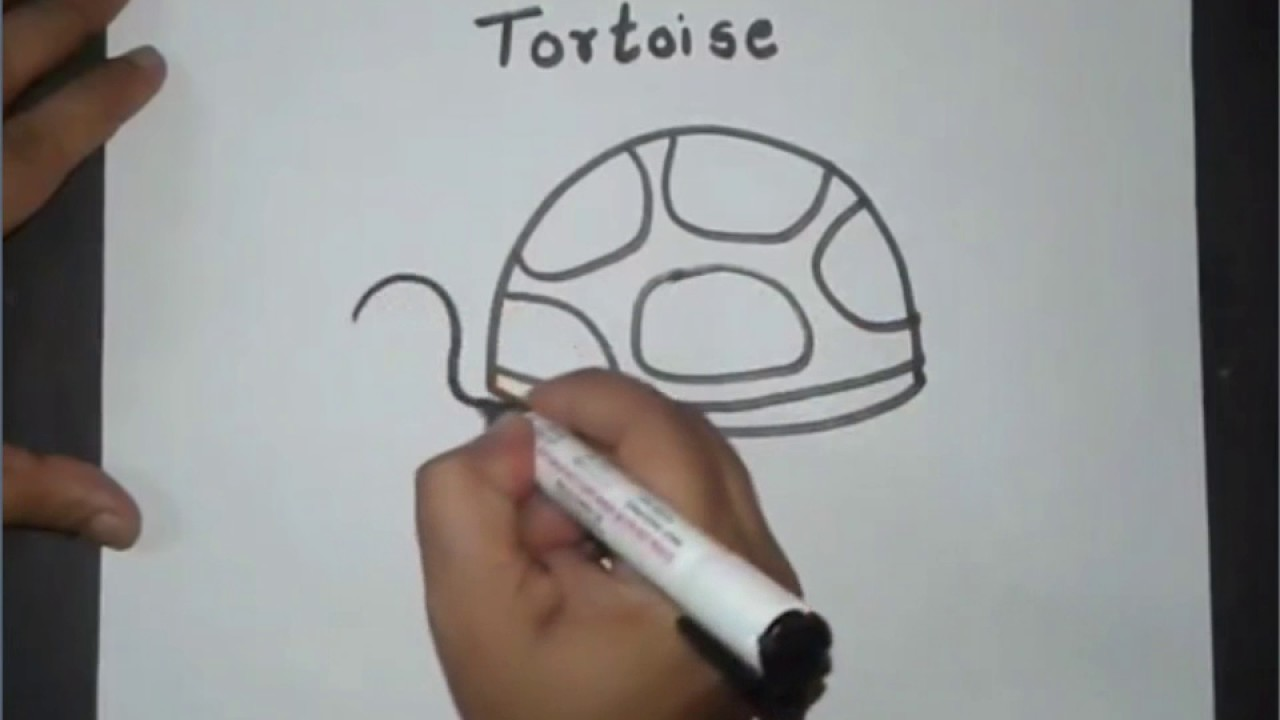 how to draw tortoise by deepak drawing class youtube