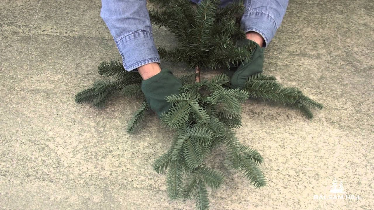 How to Properly Shape a Christmas Tree Branch - YouTube