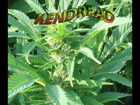 KENDREAD   -     LOVE DUB