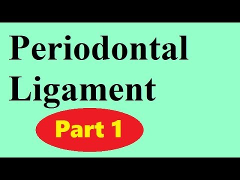 Periodontal ligament Part 1: the principal fibers