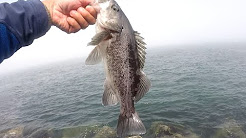 newport oregon jetty fishing rock bass august 23 2014