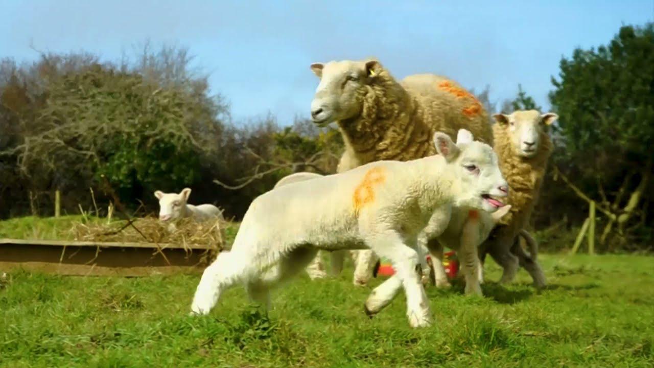 Spring on Hendra Croft Farm