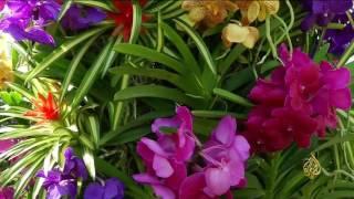 هذا الصباح- زهرة الأوركيد في معرض الزهور بأميركا