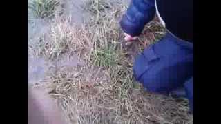 Ржачные видео 1-Какашка
