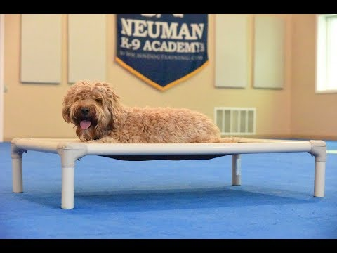 Aussie (Labradoodle) Boot Camp Dog Training Video Demonstration