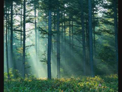 Forest Piano : Dan Gibson - Summer Sublime