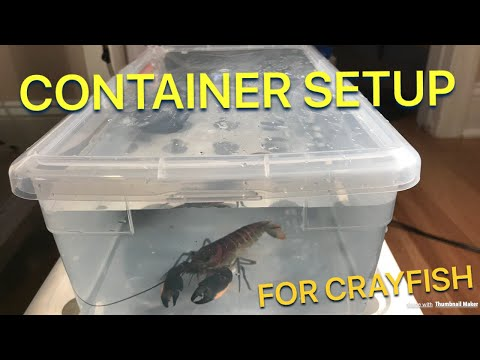 Create A Container Setup For CRAYFISH! Tutorial | Crayfish Setup | HOW TO