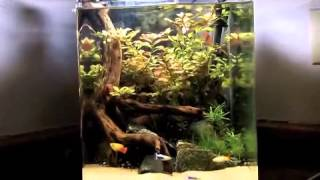 high light on a planted aquarium tip and why i use it
