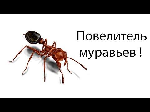Повелитель муравьев !