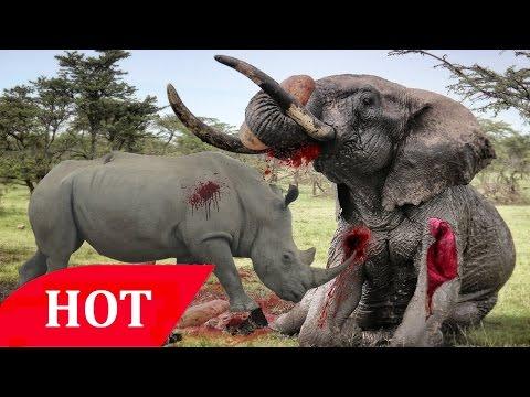 Elephant Animals & Documentary Channel wildlife animal Geographic #006 HD