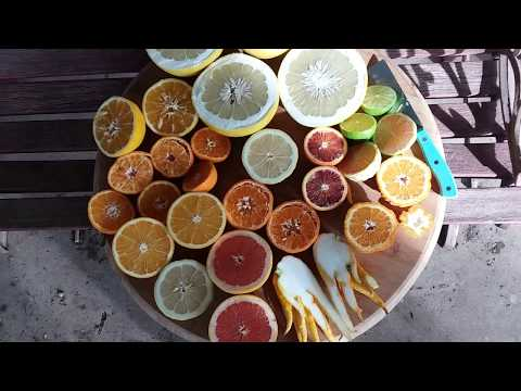 Citrus Varieties From My Yard In February!