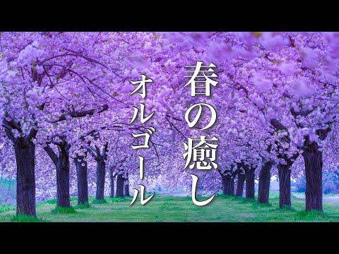 春のオルゴール曲メドレー【ゆったり睡眠用BGM】心が落ち着く癒しのメロディー♪