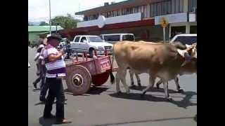 Ox Cart Parade Atenas Costa Rica April 29. 2012