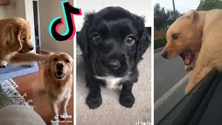 Funny DOGS of TikTok ~ Best Compilation of Cute Puppy TIK TOKS