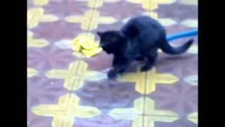 улетное видео кот и вода.mp4