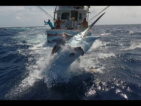 Cairns Black Marlin Fishing