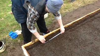 Подготовка грядки для посадки лука и посев моркови Совместные посадки