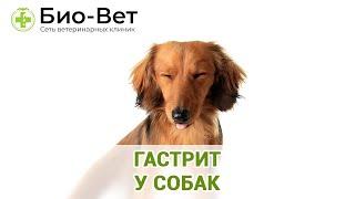 Гастрит у собак. Ветеринарная клиника Био-Вет.