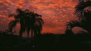Baixar Petit biscuit - sunset lover  (video edit) #sunsetlover