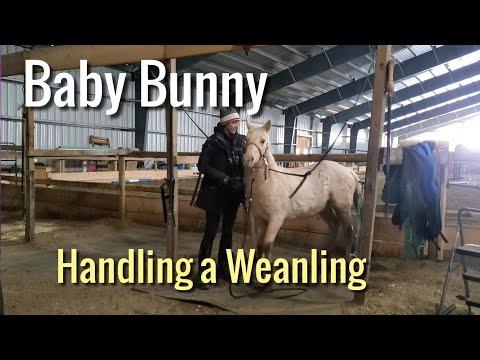 Training My Baby Horse Bunny