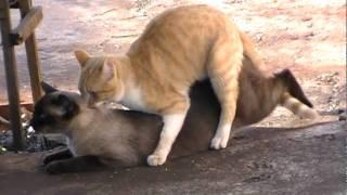 gatos transando