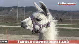 À Avignon, le désarroi des  cirques  à l'arrêt