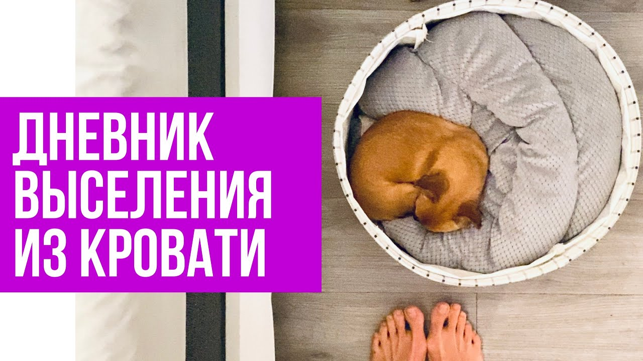 Как приучить собаку спать отдельно. Дневник выселения собаки из кровати #amydog