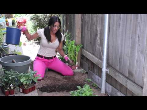 Winter Soil Preparation for Vegetable Gardening : The Chef's Garden